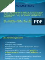 Cianobacterias Botanica