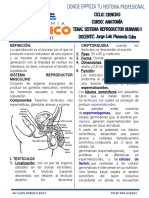 Anatomia Sist Reproductor Masculino