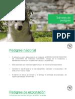 tra¡mites_de_pedigree.pdf