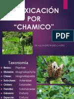 Intoxicación Por Datura Stramonium