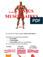 tissus musculaires 1