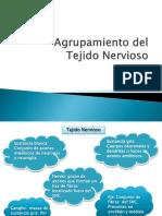 Agrupamiento del tejido nervioso.pptx