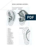 Zonas auriculares
