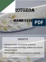 Protozoa mamb 2111