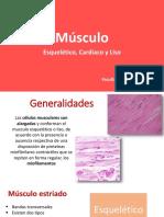 msculoteoria