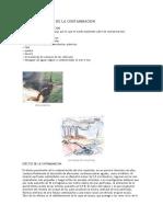 Causas y Efectos de La Contaminacion