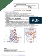Anexo 2Y3 Guía 1-Septimo LA CIRCULACIÓN EN EL HOMBRE.pdf