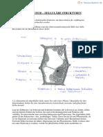 Bioklausur Q11
