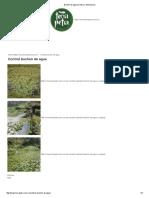 Buchón de agua _Control y eliminacion.pdf