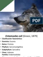 Amebas Comensales - Copia