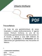Tricocéfalo y Enterobius Version Buena - Copia