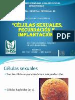 celulas sexuales