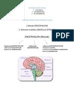 SYSTEMA NERVOSUM (Autosaved)