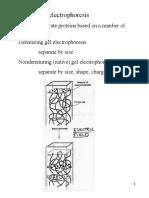 Elektroforesis Protein Endah