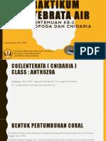 Praktikum - Cephalopoda Dan Cnidaria