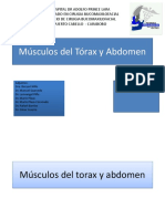 Muculos Del Torax y Abdomen