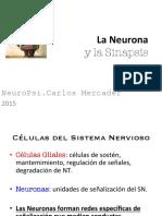 Neurona-Sinapsis