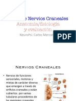 Pares craneales-UVM (1) (1)