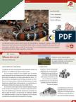 011-vibora-de-coral.pdf