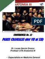 12-. Pares Craneales (II)