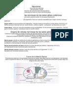 Neuroanatomia Vias Ascendentes y Descendentes
