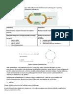 METABOLIZM- wst-p+enzymy+fotosynteza TEORIA.docx