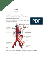 Anato Generalidades Del Aparato Cardiovascular y Corazon