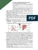 Resumen Anatomia 2016