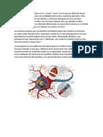 Las Neuronas Biologia