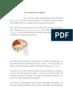 Lóbulo Parietal.docx