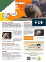 Armadillos buenos aires (Abba).pdf