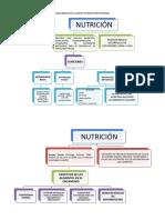MAPA MENTAL NUTRICIÓN.docx