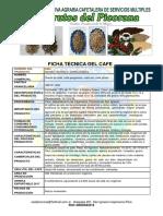 Ficha Tecnica Cafe