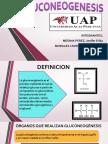 Gluconeogenesis Ppt Yesi (1)