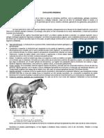 3º PEB - Apuntes Generales de Evolución