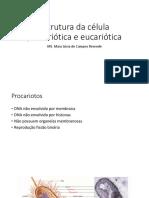 Estrutura Da Célula Procariótica e Eucariótica Aula 3 PDF