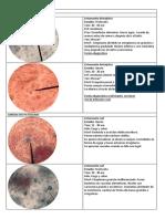 Parasitología Final