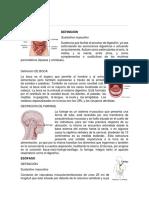 Digestivo MODIFICADO