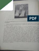 Interpretacion Radiografica - Puntos de Referencia de Radiografias Normales