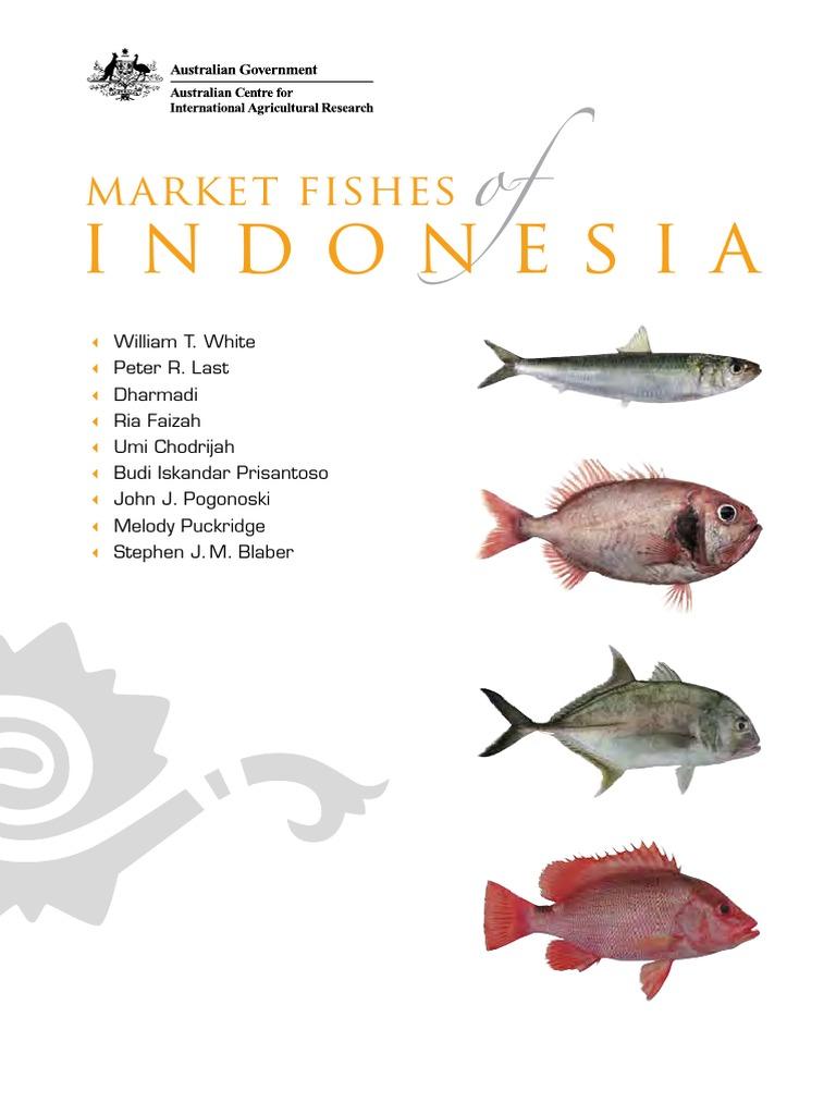 Market Ikan Indonesia The Little Things She Needs Lida Silver Sepatu Flat Perak 40