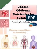 Cómo Obtienen Nutrientes Las Células