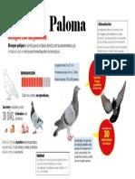 Infografía sobre La Paloma