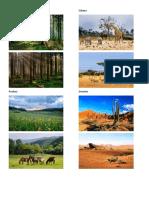 Bosque Imagenes