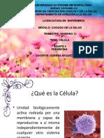 1.celula-1