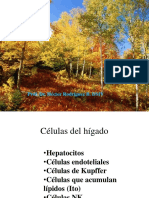 ClaseHigadoBiliar 2 2012