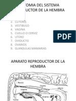 Anatomia Del Sistema Reproductor de La Hembra