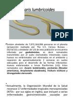 Ascaris Lumbricoides Copia