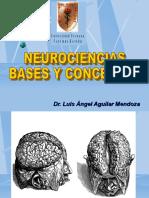 1 Neurociencia Bases y Conceptos
