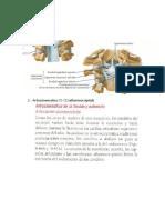 Cervical Alto