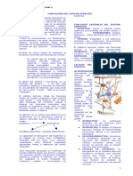 22477105 Morfologia Sistema Nervioso 01 Uac Valdivia